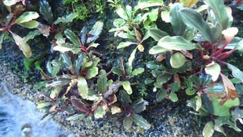Floraexifremover.com(80).jpg