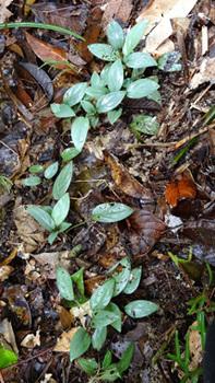 Pearl-Green-Velvetexifremover.com+(12).jpg