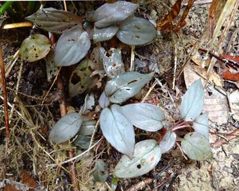 Silver-Velvet-Pulau-Linggaexifremover.com+(26).jpg