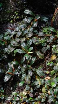 Sumatera-Borneo+Sept+2013+302.jpg