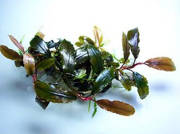 copper_leaf2[1].jpg