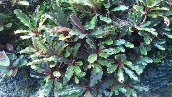 Floraexifremover.com(70).jpg